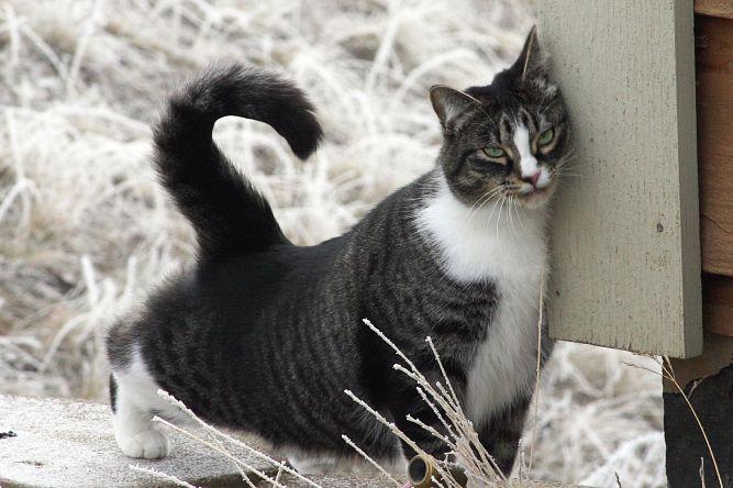 Le chat marque son territoire en se frottant contre les objets.