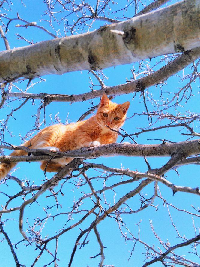 Très agile, le chat grimpe dans les arbres.
