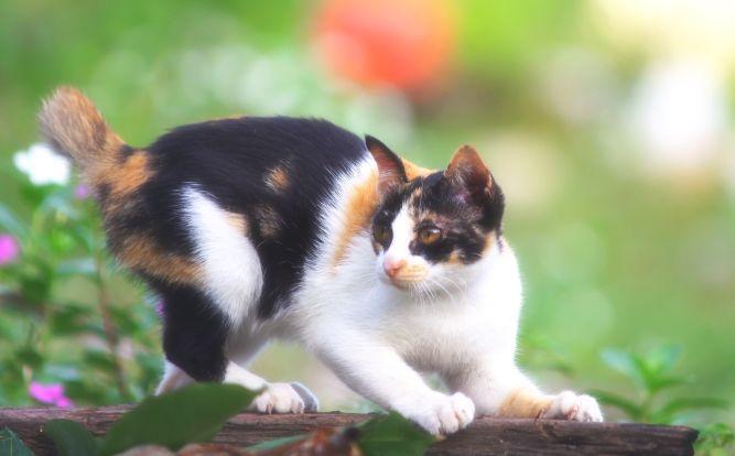Hyper-vigilant, le chat sursaute pour un rien.